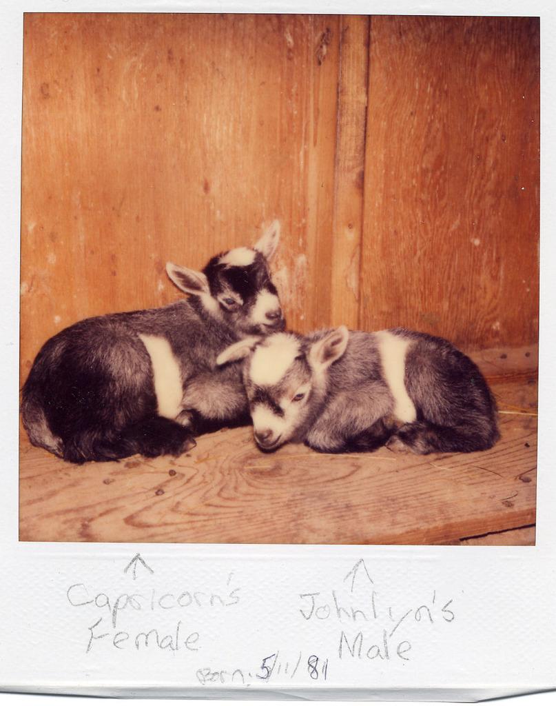 internet k hole goats